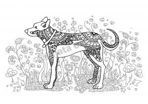digital: Coloring - Dog